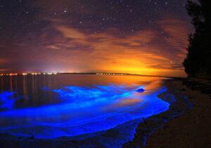 Fosforescenza marina