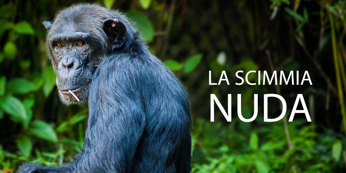 La scimmia di Morris