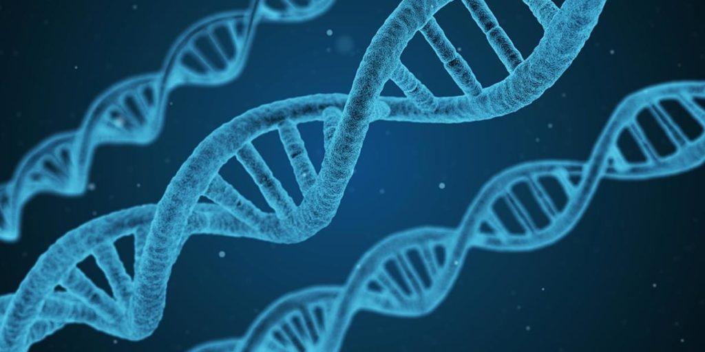 Il DNA di Leonardo Da Vinci