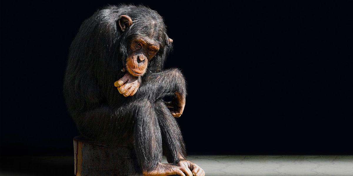 Sperimentazione su animali